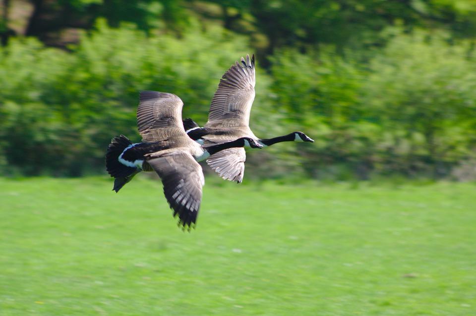 Où observer les oiseaux dans le Golfe du Morbihan